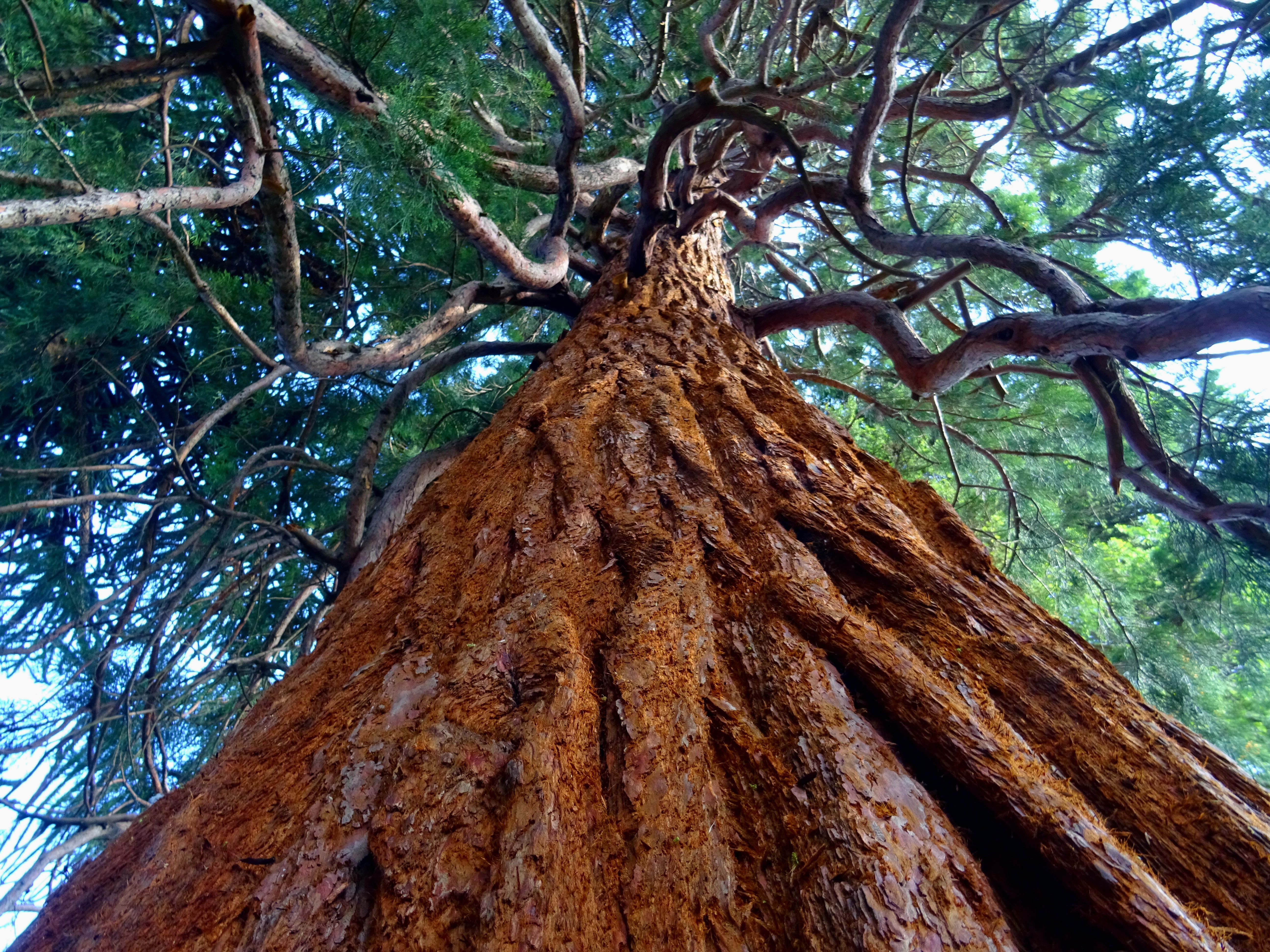 Ancient Tree Image